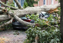 arbre-voiture